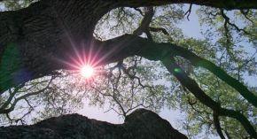 L'arbre de lavida